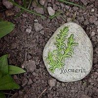 Rosemary.1