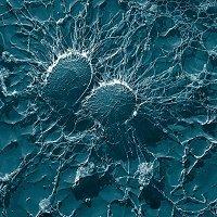 bacteria for newsletter sept